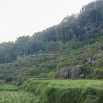 Arrozales en Batutumonga (Tana Toraja)
